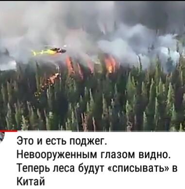 Профессиональный поджигатель леса