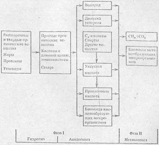 групп микроорганизмов.