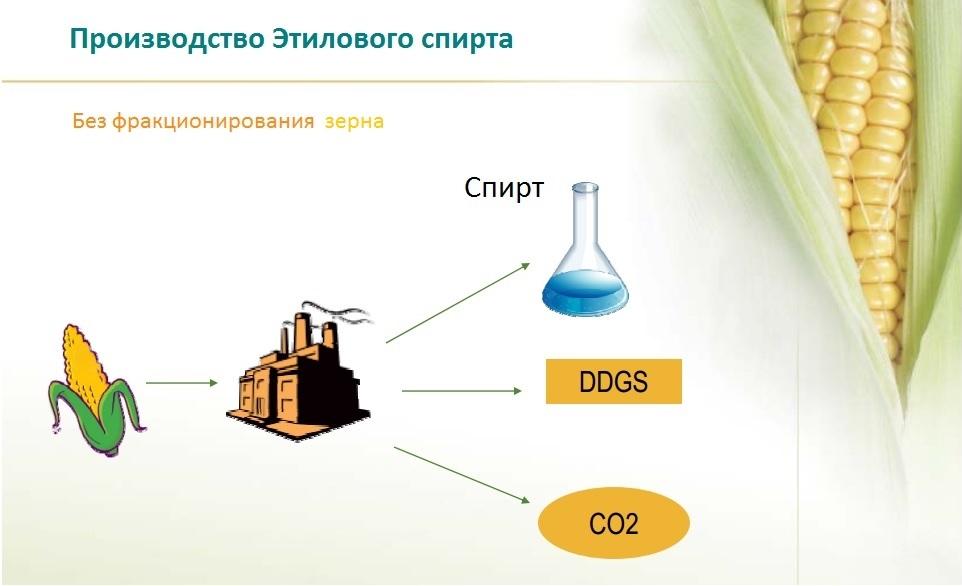 Принципиальная технологическая схема переработки кукурузного зерна без выделения зернового зародыша