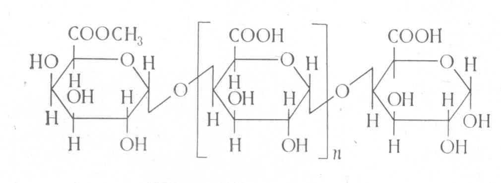 Ксилоза