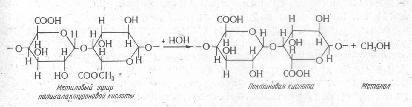 при разваривании зерна или картофеля или свеклы под давлением для переработки на спирт пектиновые вещества гидролизуются с образованием метанола